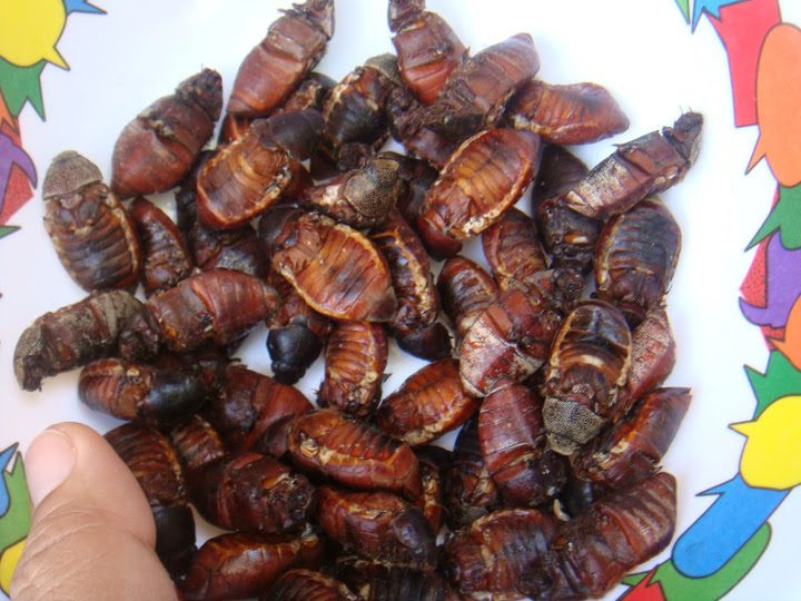 8 of the Most Bizarre, Exotic Food in the Philippines ...